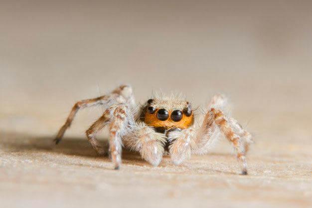 quels solutions pour se d barrasser des araign es dakola. Black Bedroom Furniture Sets. Home Design Ideas