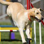 Sport canin: pourquoi et comment le pratiquer avec son chien?