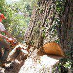 quels sont les raisons de l'abattage d'un arbre ?