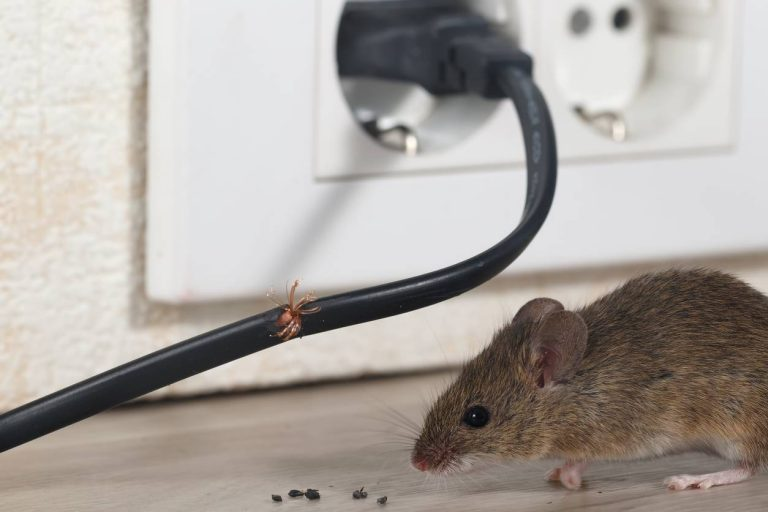 quelles sont les méthodes efficaces pour éloigner les nuisibles de son habitation ?